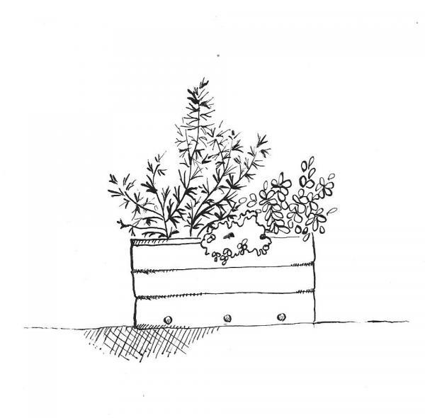Free black and white clipart of trees planted in buckets clipart library library 18. Plants Grown in Containers | NC State Extension Publications clipart library library