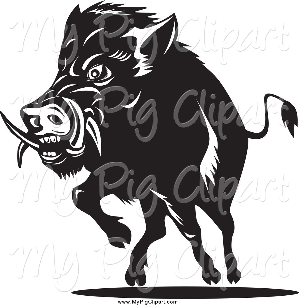 Free black and white clipart of wild boars picture black and white Swine Clipart of a Black and White Charging Wild Boar by patrimonio ... picture black and white