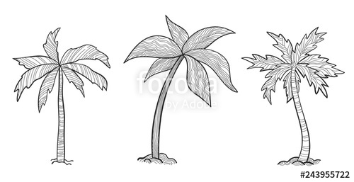Free black and white clipart of young trees image freeuse Set tropical palm trees with leaves, mature and young plants, black ... image freeuse