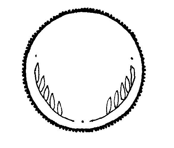 Download best . Free black and white clipart quarter illustration