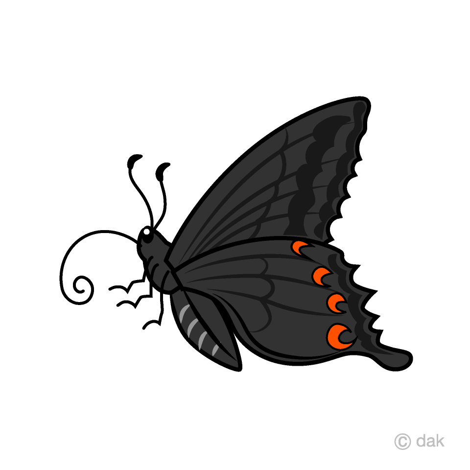 Free black swallowtail clipart. Butterfly picture illustoon