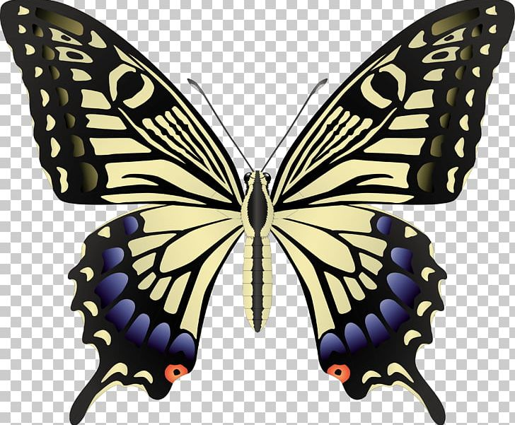 Free black swallowtail clipart vector library stock Butterfly Black Swallowtail Insect PNG, Clipart, Arthropod, Black ... vector library stock