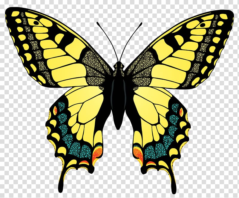 Free black swallowtail clipart clipart library download Swallowtail butterfly Eastern tiger swallowtail , swallow ... clipart library download