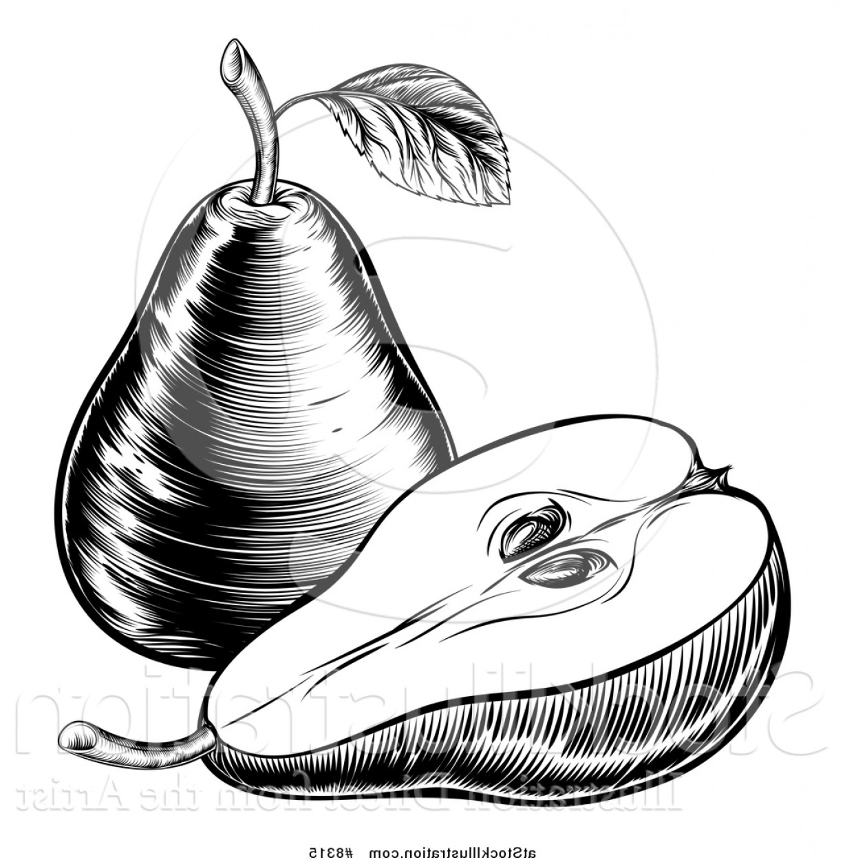 Free black & white clipart of a pear core. Vector illustration and vintage