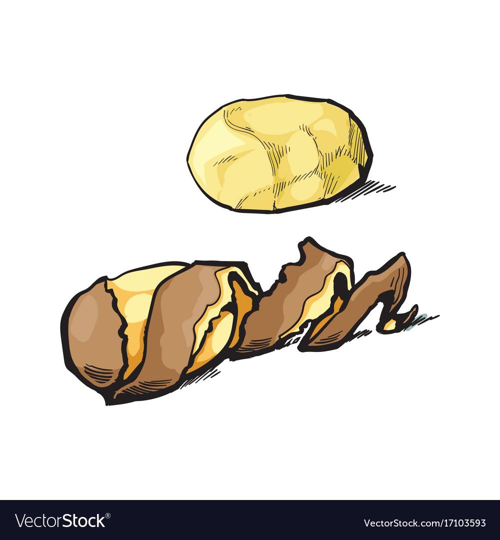Free black & white clipart potato peel. Sketch raw peeled with