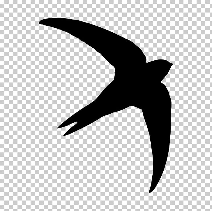 Common swift silhouette photography. Free black white clipart sswift