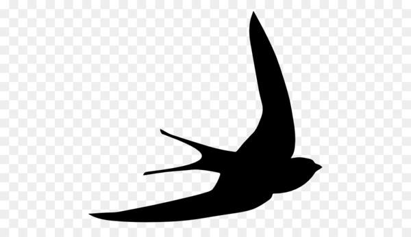 Bird common swift computer. Free black white clipart sswift