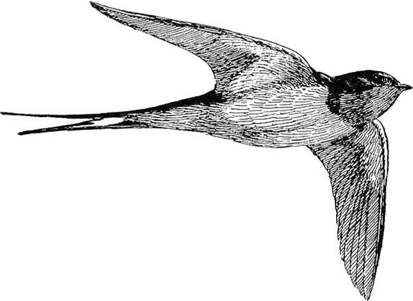 Free black white clipart sswift. Bird large images lovely