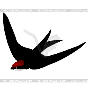 Swift vector image panda. Free black white clipart sswift