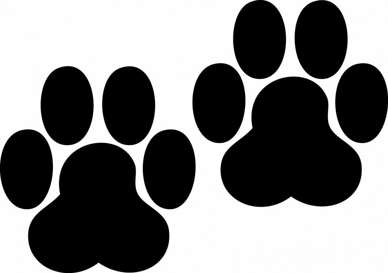 Free bobcat paw print clipart png free Bobcat Paw Print - Cliparts.co | Cricut Projects | Paw print clip ... png free