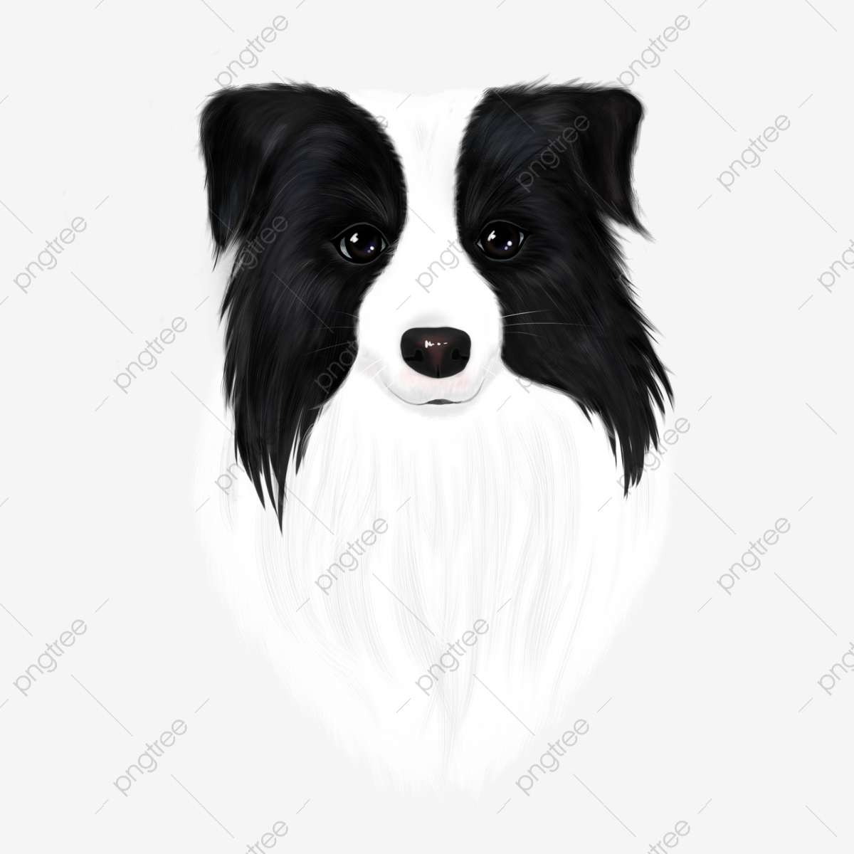 The dog pet png. Free border collie clipart