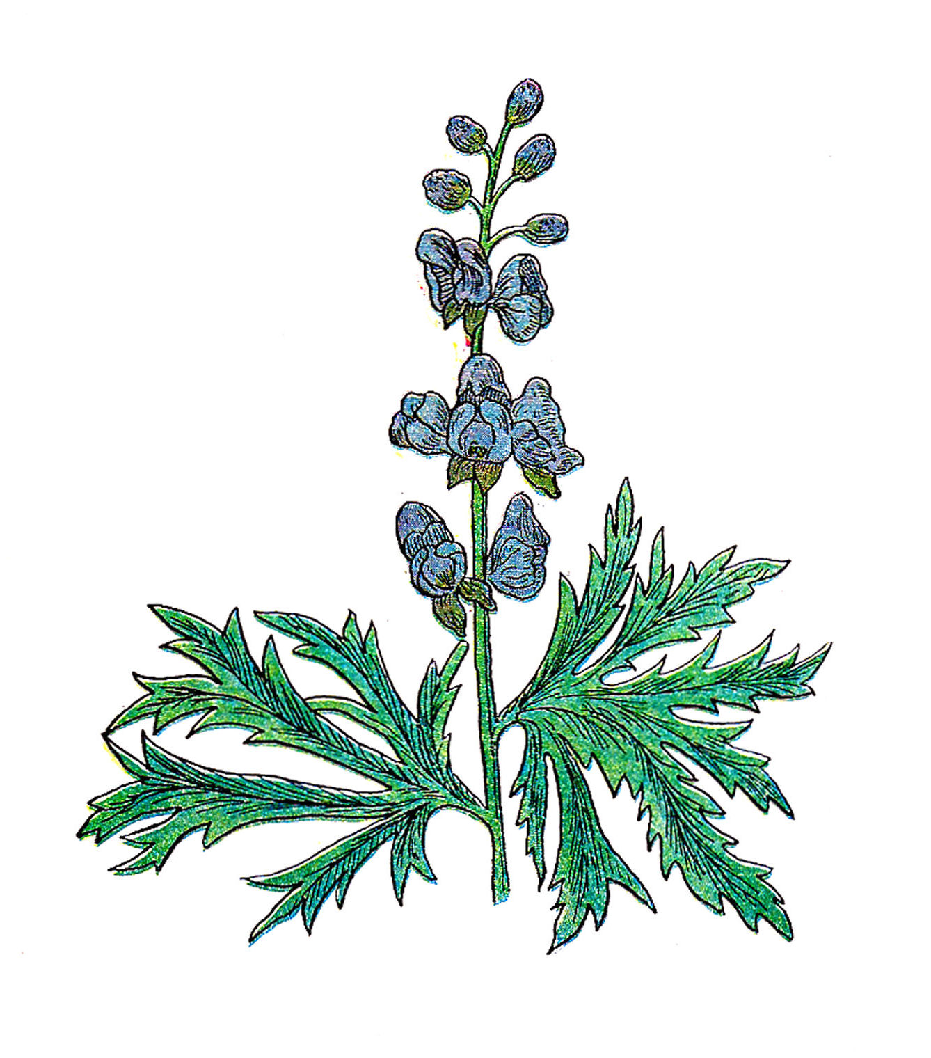Free botanical clipart graphic download Free Botanical Clip Art: | Clipart Panda - Free Clipart Images graphic download