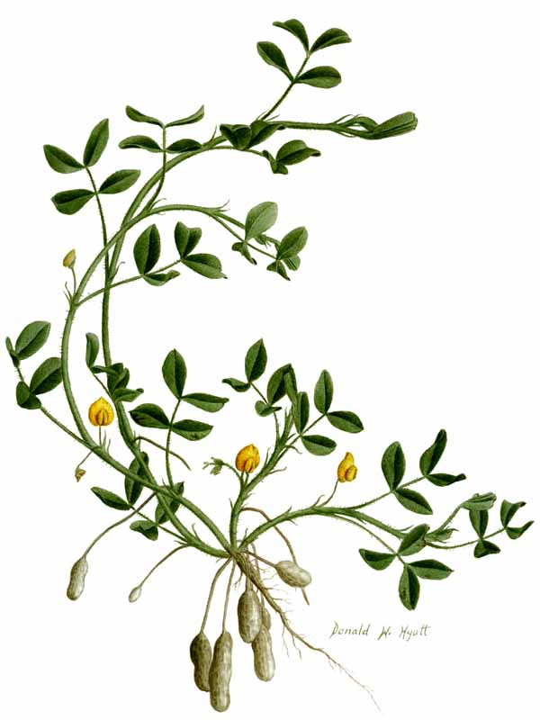 Botany pictures download clip. Free botanical clipart