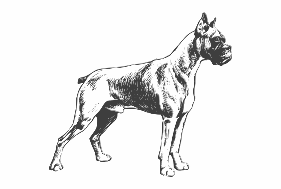 Free boxer dog clipart image royalty free library Jpg Royalty Free Boxer Dog Clipart Black And White - Boxer Dog ... image royalty free library