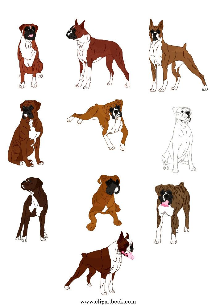 Free boxer dog clipart free download LE - Realistic Boxer dogfree vector clipart designs for digitizers ... free download