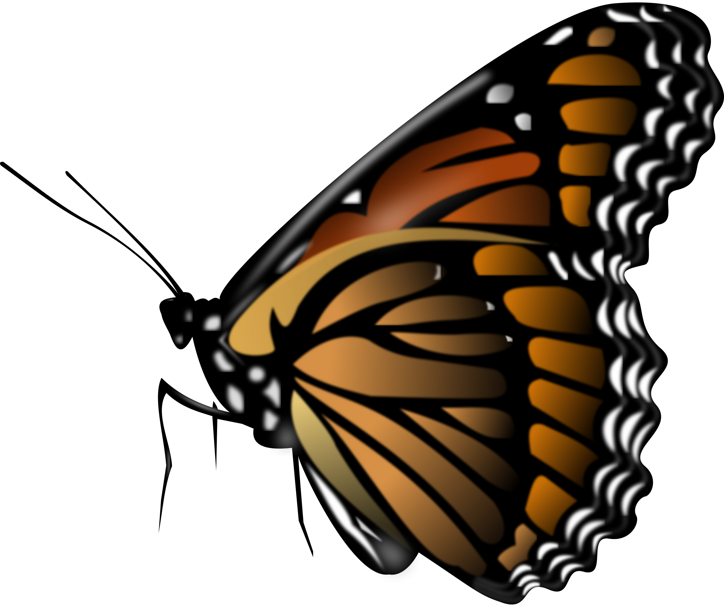 Free butterfly clipart png png Butterfly PNG image, free picture download png