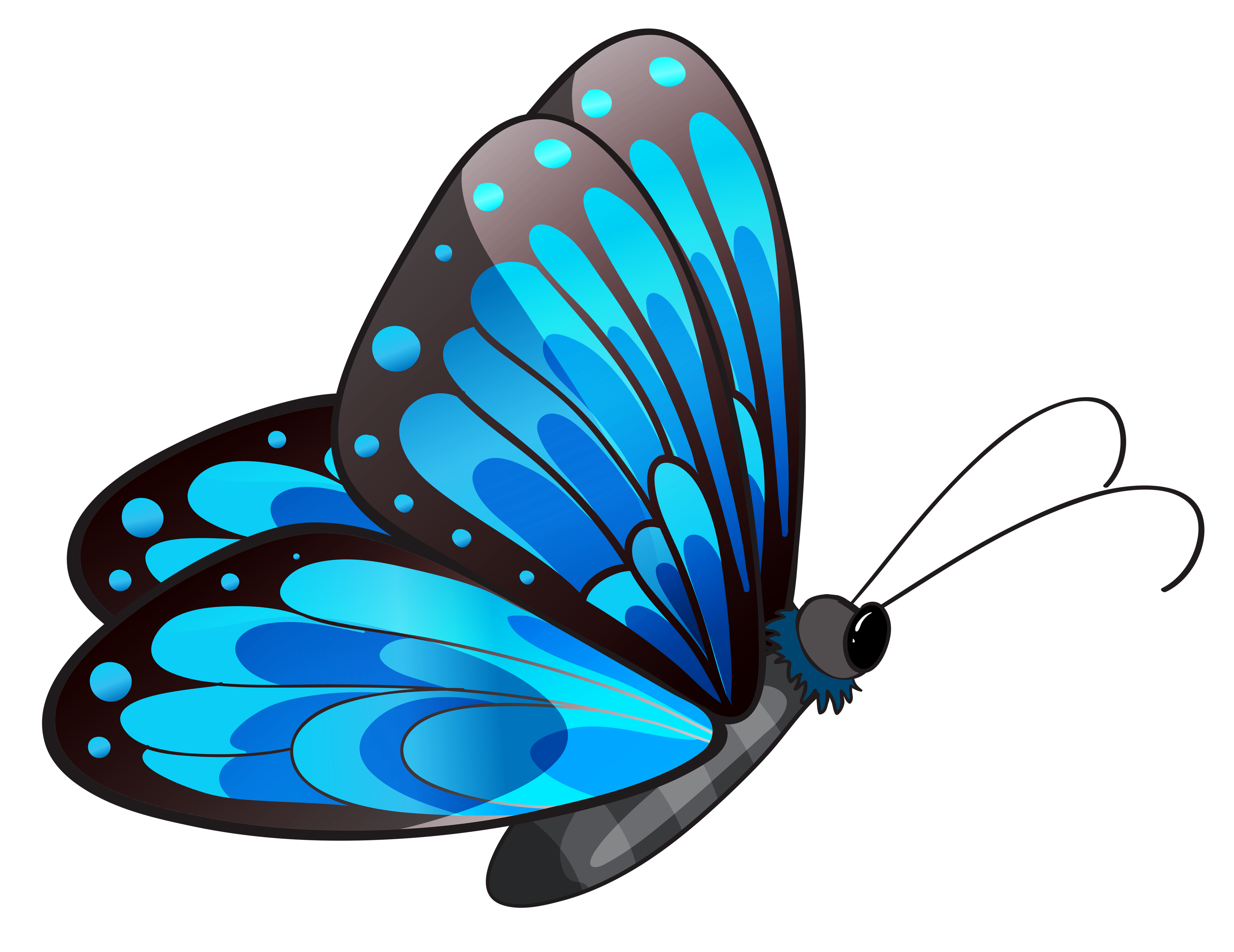 Free butterfly clipart png clip art royalty free download Butterfly clipart png images - ClipartFest clip art royalty free download