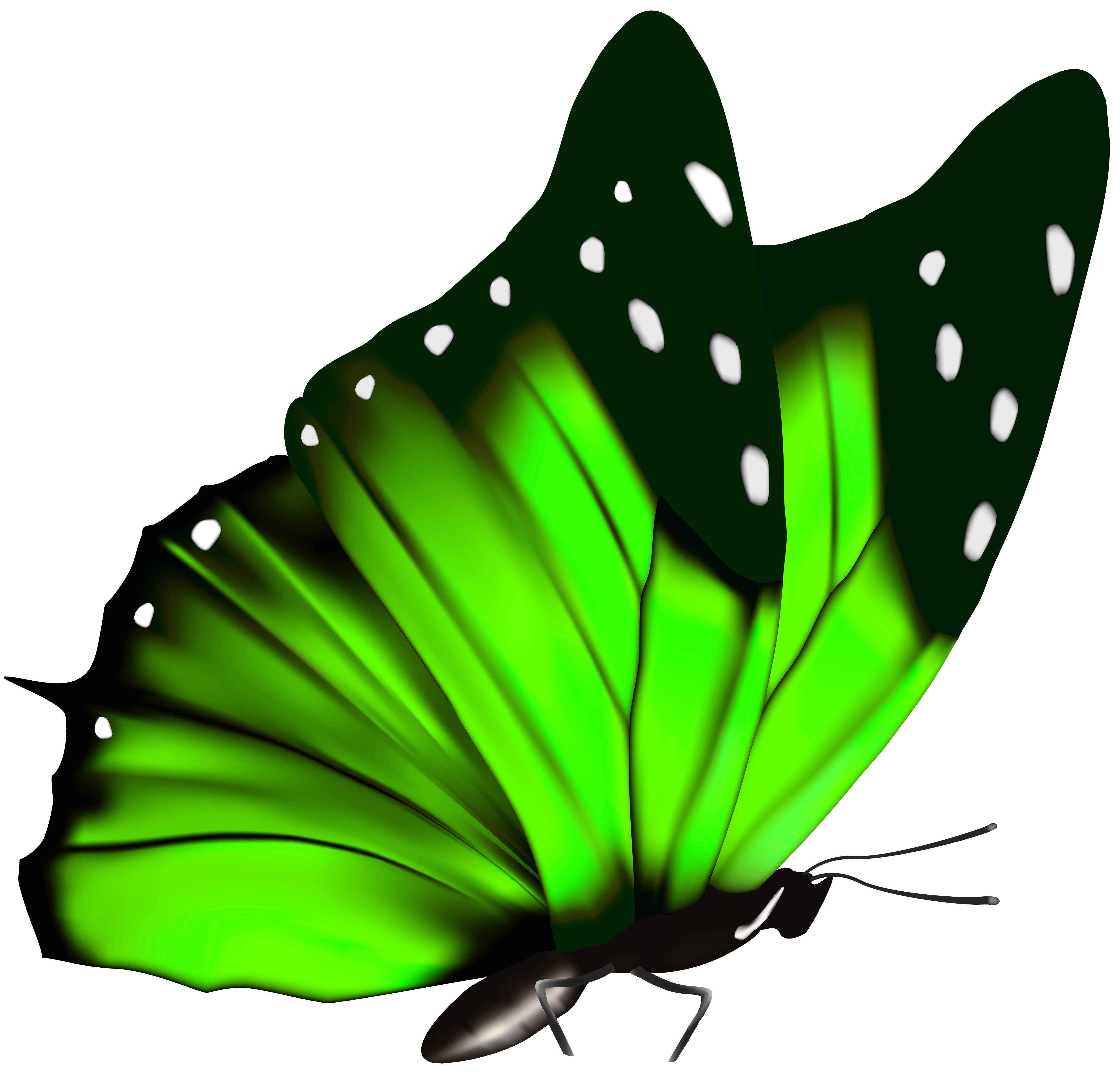 Free butterfly clipart png download Green Butterfly PNG Clipart Image download