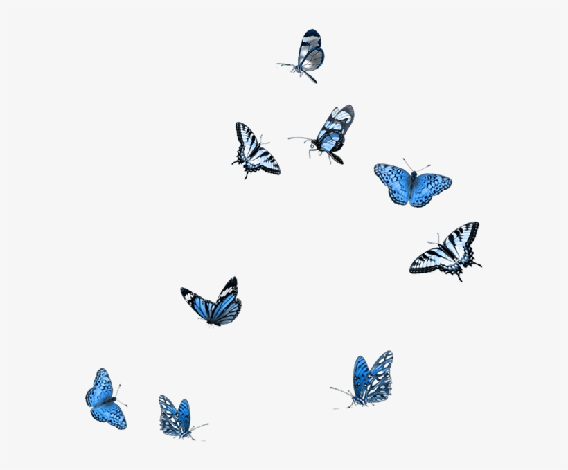 Free butterfly overlay clipart png black and white Butterfly Party, Moth, Mood Boards, Embellishments, - Butterfly ... png black and white