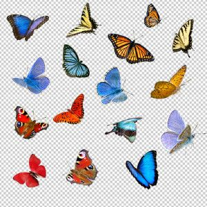 Free butterfly overlay clipart clip art freeuse download Butterflies (vol 1) | COLLECTION....Butterflies in 2019 | Photoshop ... clip art freeuse download