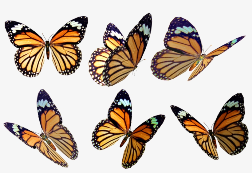 Free butterfly overlay clipart clip art free stock Butterflies 4 Png Stock By Roys-art - Free Butterfly Overlay Png ... clip art free stock
