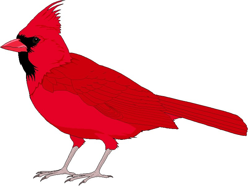Free cardinal bird clipart picture freeuse stock Cardinal bird clipart free 6 » Clipart Portal picture freeuse stock