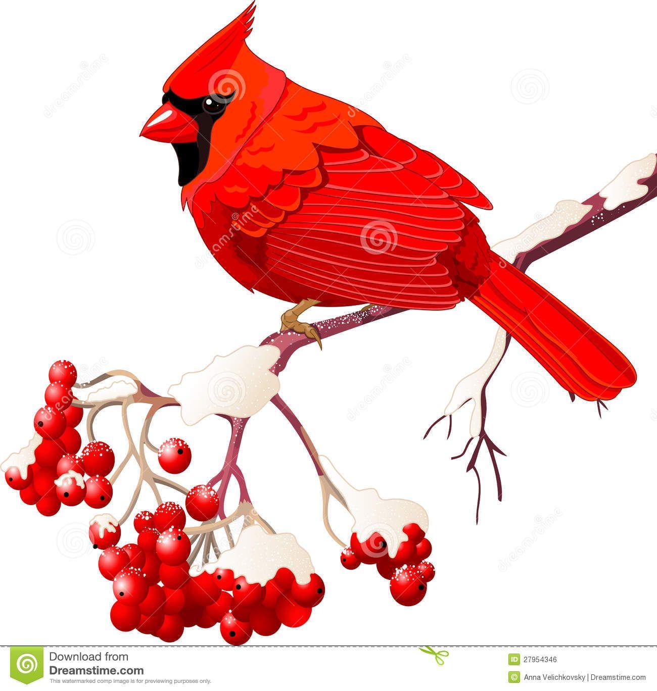 Free cardinal bird clipart svg transparent download cardinal bird free clipart - Google Search | Xmas | Cardinal birds ... svg transparent download