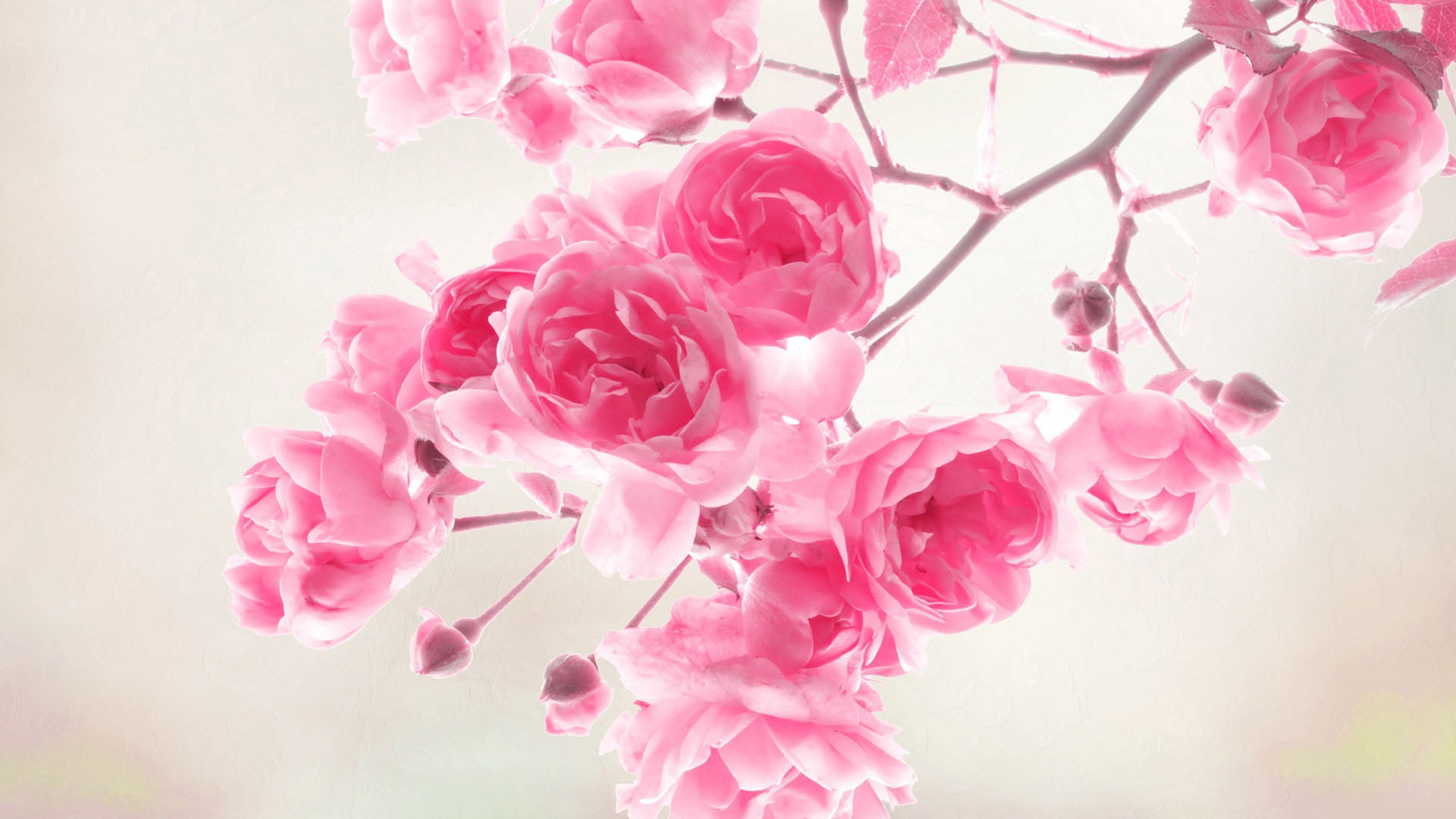 Free cartoon pictures of flowers image free cartoon flowers wallpaper image free