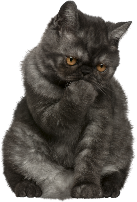 Free cat clipart pictures clip Cat PNG Clipart | Gallery Yopriceville - High-Quality Images and ... clip