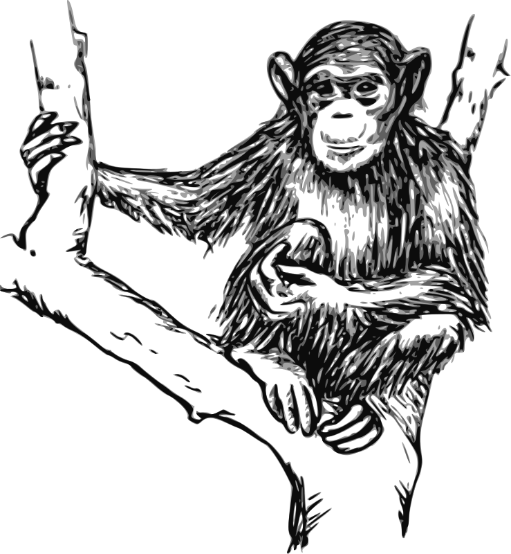 Free chimpanzee clipart image freeuse library Free Clipart: Grayscale chimpanzee | papapishu image freeuse library
