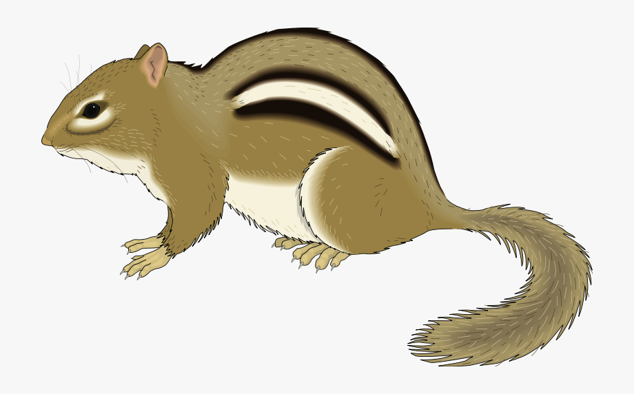 Free chipmunk clipart clipart library download Chipmunk Animal Clipart Pictures Royalty Free Org - Chipmunk Clipart ... clipart library download