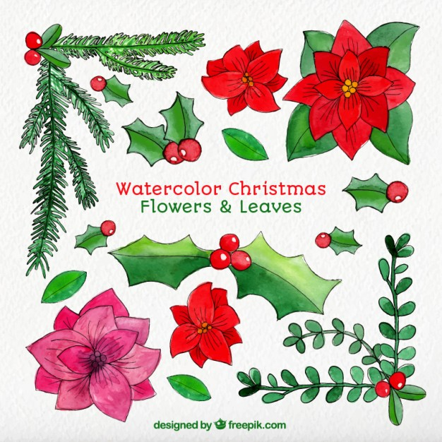 Free christmas flowers download png transparent library Watercolor christmas flowers and leaves Vector | Free Download png transparent library