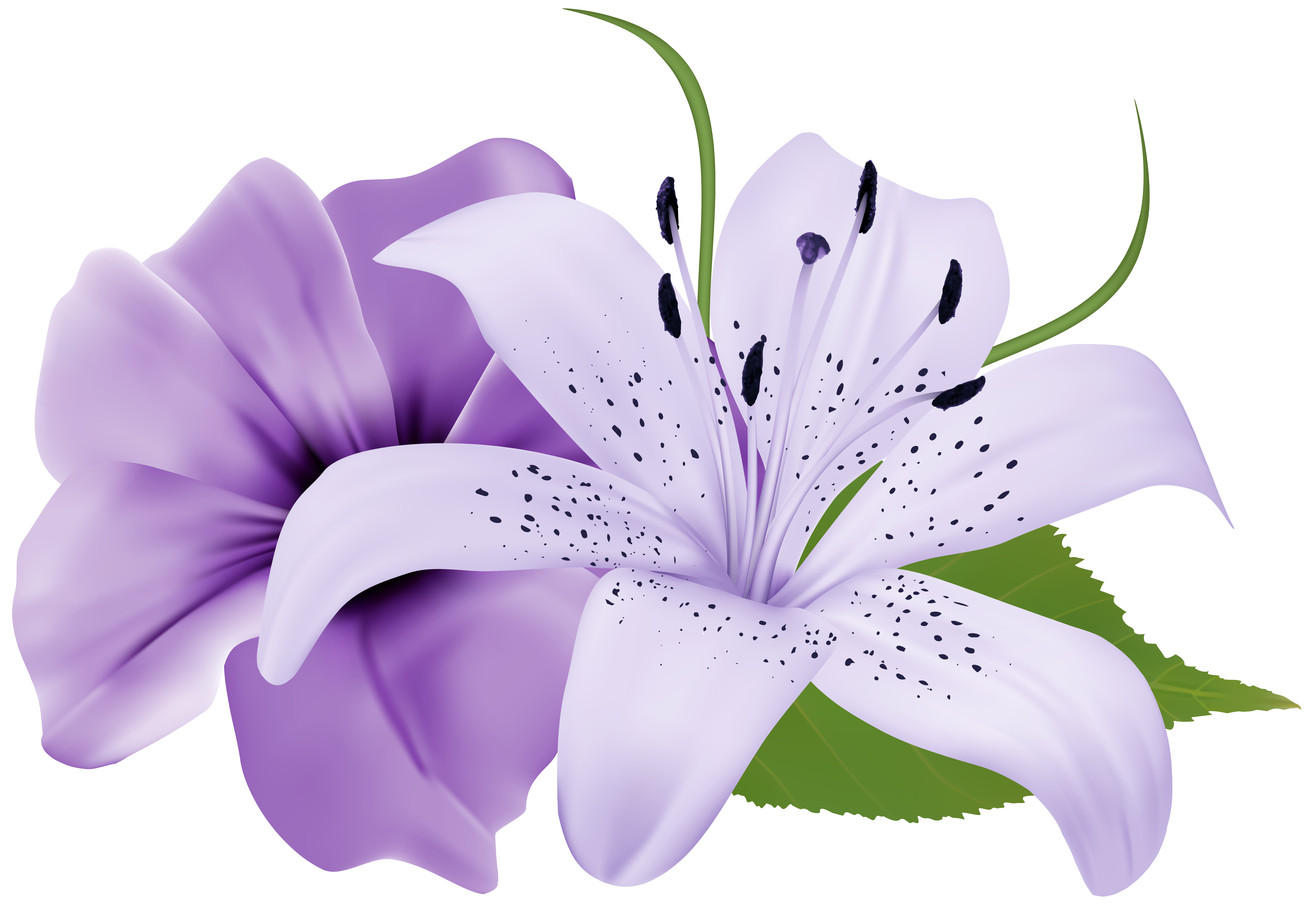 Free clip art flowers image free download Purple Two Exotic Flowers PNG Clipart Image | Gallery Yopriceville ... image free download