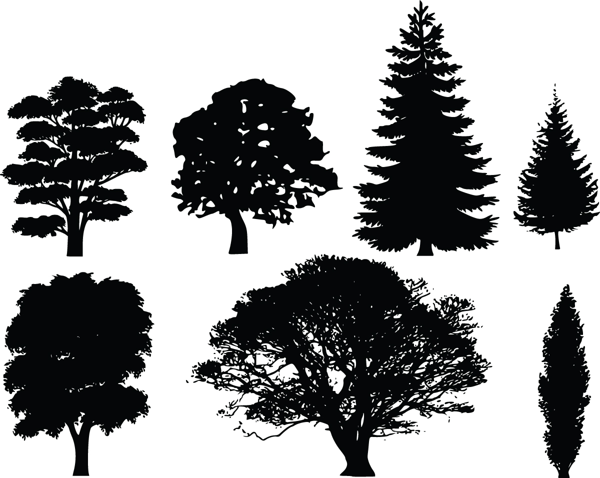 Free clip artwork vector free download Clip art family tree … | Family History Event Ideas | Pinterest ... vector free download