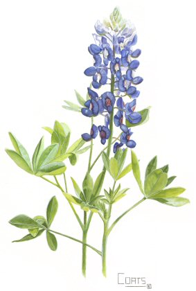 Free clipart and free downloads of bluebonnets svg black and white Free Bluebonnet Cliparts, Download Free Clip Art, Free Clip Art on ... svg black and white