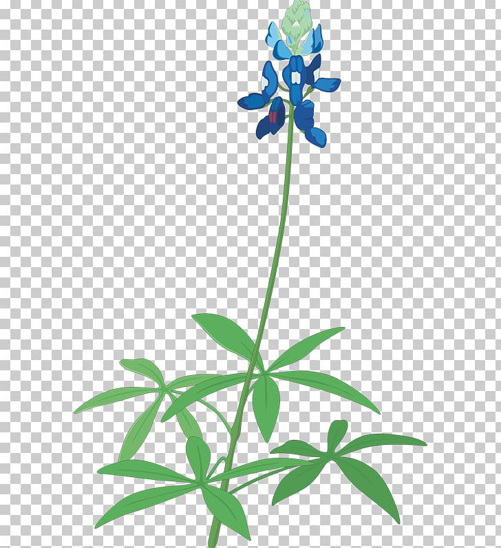 Free clipart and free downloads of bluebonnets vector library download Floral Design Texas Bluebonnet Texas Bluebonnet PNG, Clipart ... vector library download