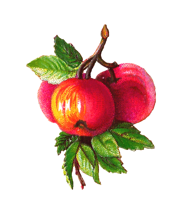 Free clipart apple branch jpg free Antique Images: Free Fruit Clip Art: Apple and Plum Clip Art on ... jpg free