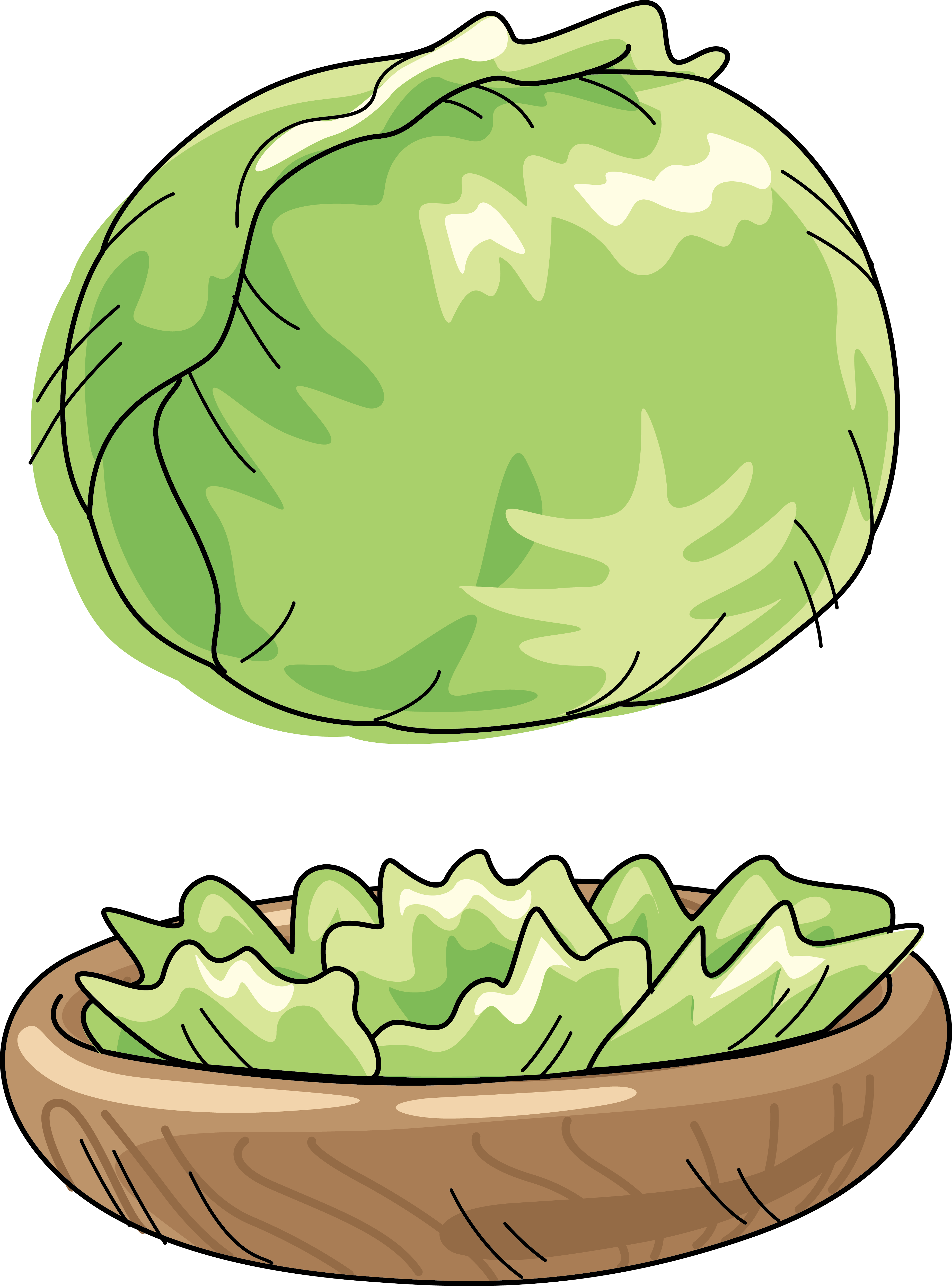 Free clipart apple tree vegan jpg transparent download Cabbage Watermelon Vegetable Cartoon Clip art - Green cabbage 3700 ... jpg transparent download