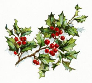 Free clipart branches with snow on them holly transparent vintage christmas flower, holly and berries image, vintage floral ... transparent