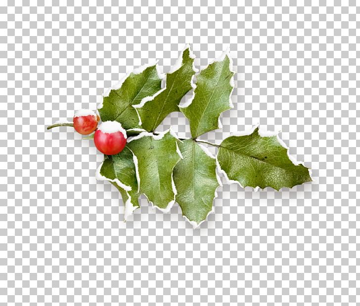 Free clipart branches with snow on them holly graphic transparent stock Common Holly Christmas Pomegranate Fruit PNG, Clipart, Apple Fruit ... graphic transparent stock