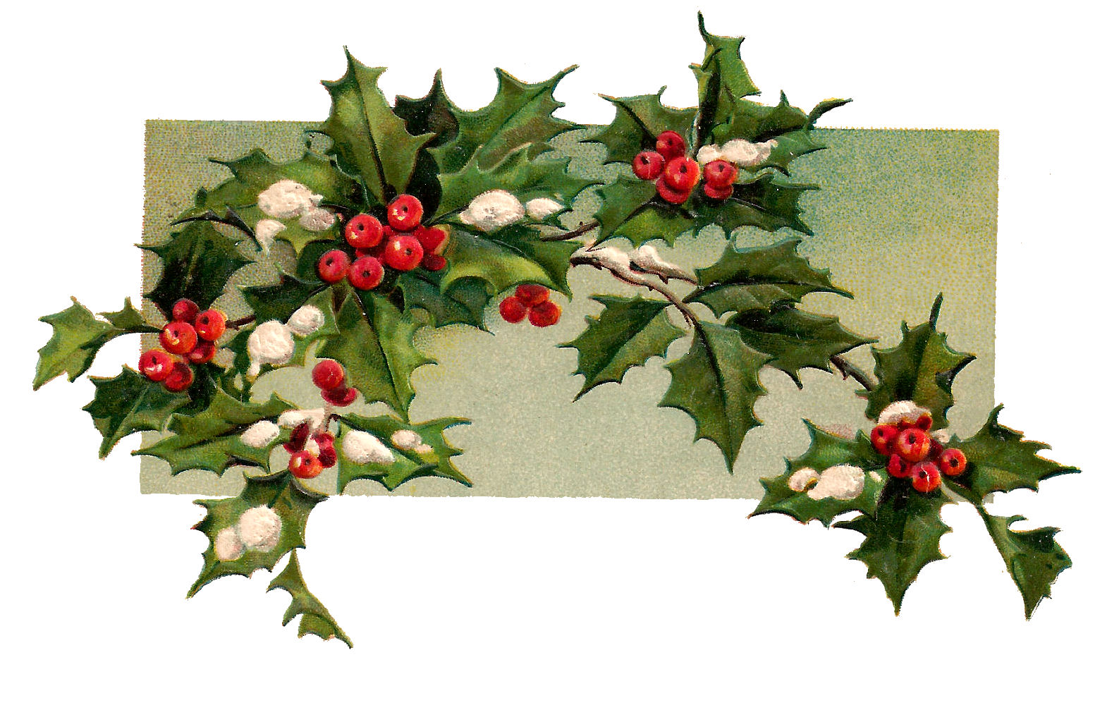 Free clipart branches with snow on them holly clip art transparent stock The Graphics Monarch: Free Digital Christmas Holly Design Element ... clip art transparent stock
