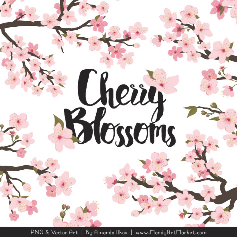 Free clipart cherry blossoms png transparent Free Cherry Blossom Clipart Vectors by Mandy - Mandy Art Market png transparent