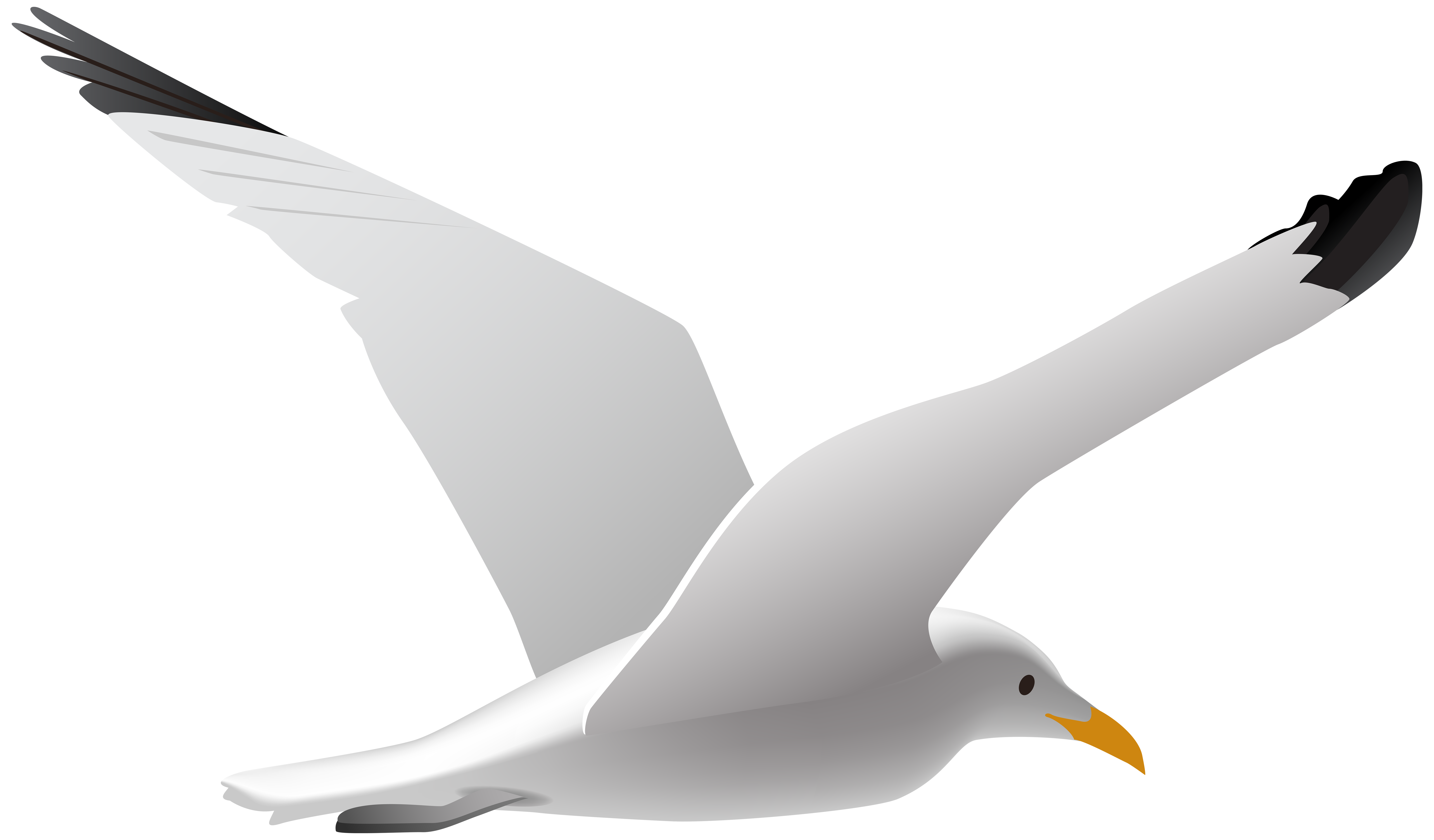 Seagull clipart free clip art library Seagull PNG Clip Art Image | Gallery Yopriceville - High-Quality ... clip art library