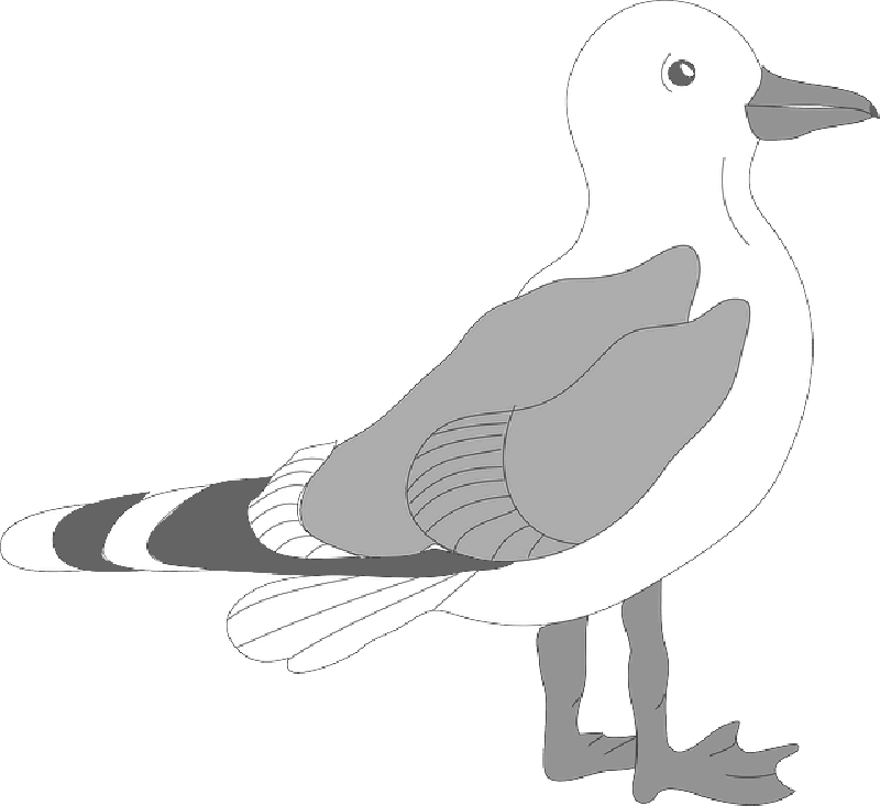 Free clipart downloads seagulls clip library Seagull PNG Transparent Clipart Image #9 - Free Transparent PNG ... clip library