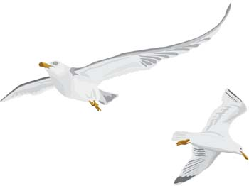 Free clipart downloads seagulls image freeuse Free Seagull Cliparts, Download Free Clip Art, Free Clip Art on ... image freeuse