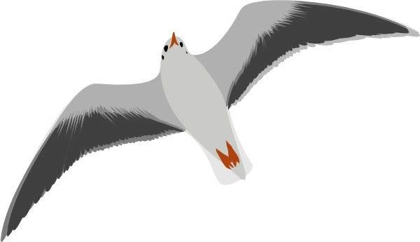 Free clipart downloads seagulls image transparent download Sea Gull Seagull clip art Free vector in Open office drawing svg ... image transparent download