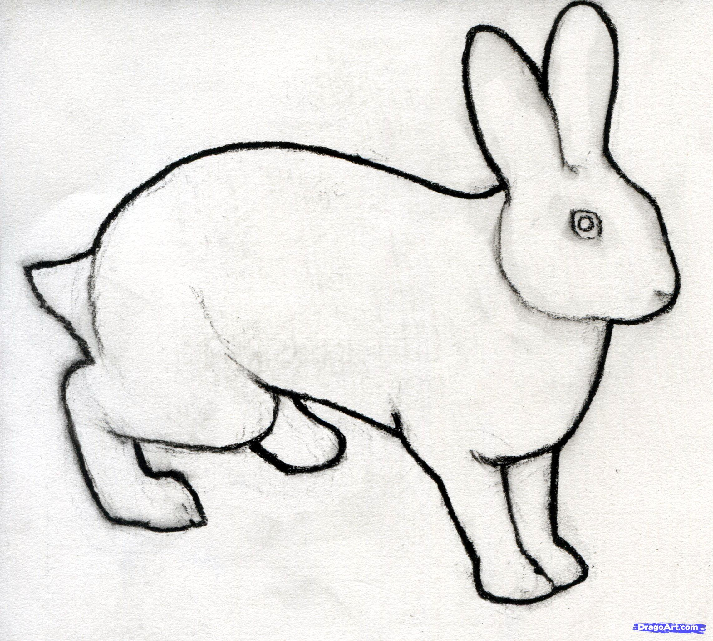 Drawing with animals download. Free clipart drawings of rabbits in the forest