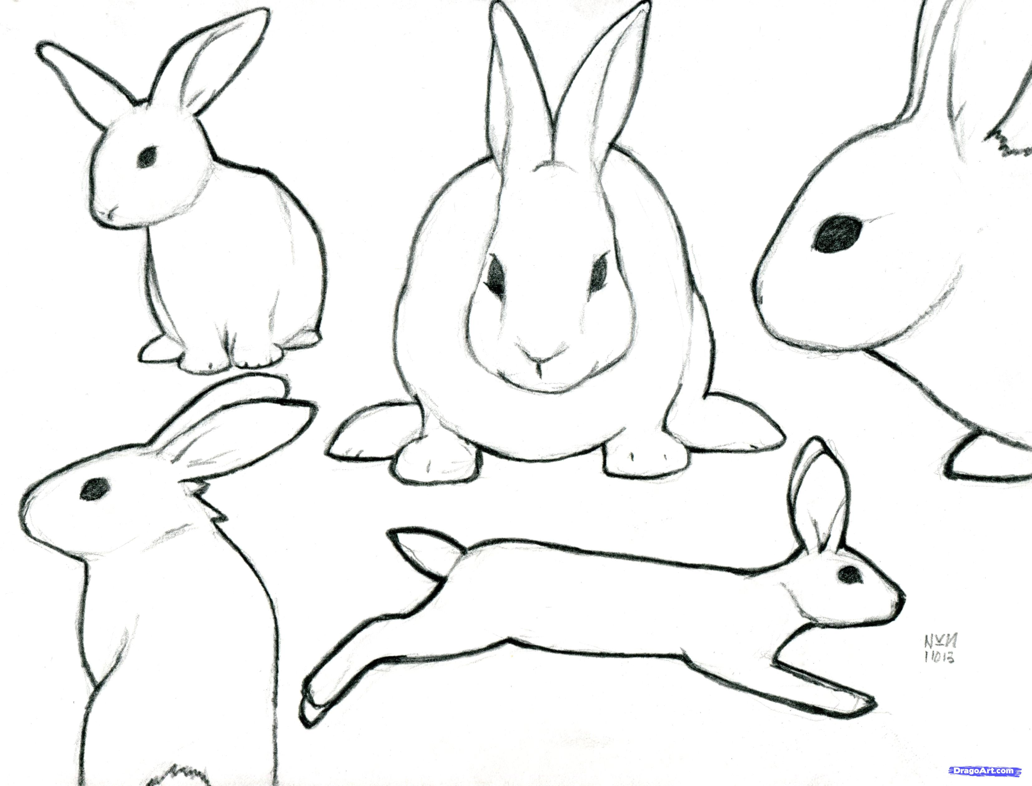 rabbit drawing profile. Free clipart drawings of rabbits in the forest