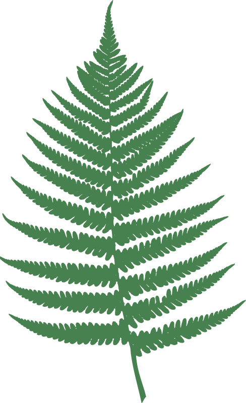 Free clipart fern leaf vector transparent stock Free Clipart: Fern leaf | Moini vector transparent stock