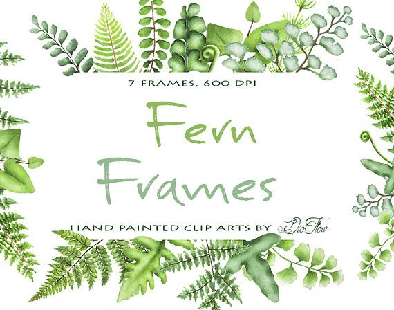 Free clipart fern leaf image library Watercolor Fern Clipart Greenery Frames Clip Art Ferns Leaf Leaves ... image library